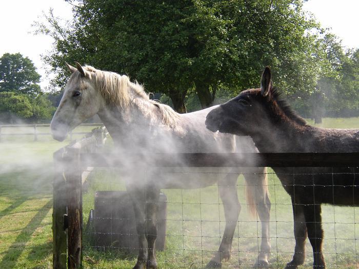 L'importance de la brumisation pour chevaux