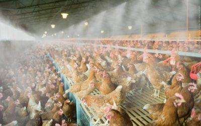Brumisateur BrumExpert : un matériel d'élevage avicole indispensable